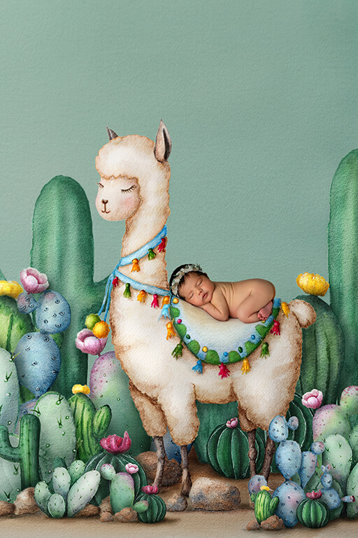 Alpaca fiesta newborn photoshoot